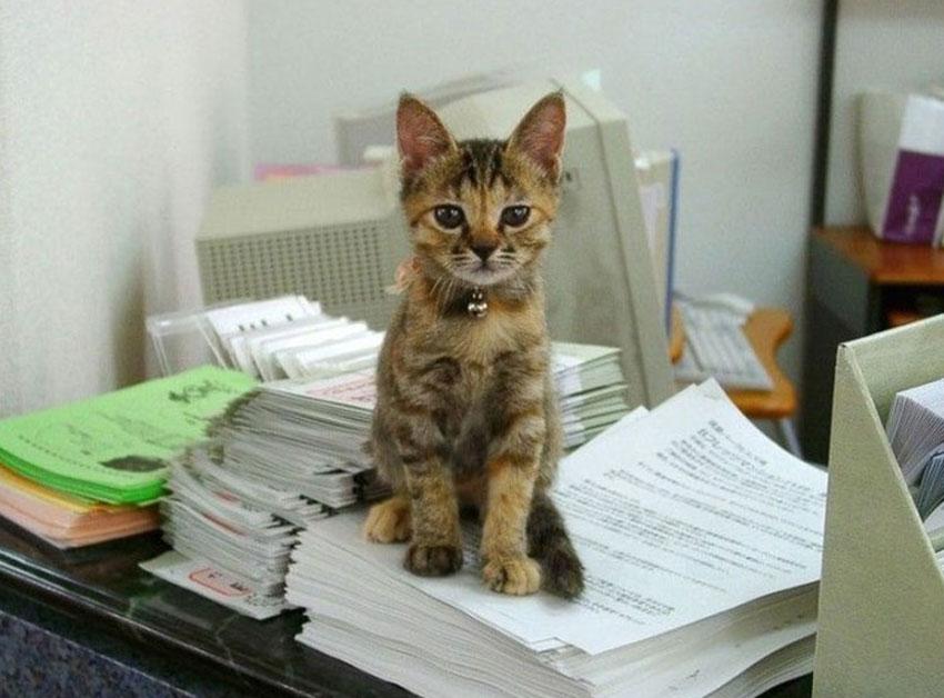 фото кошек скуку