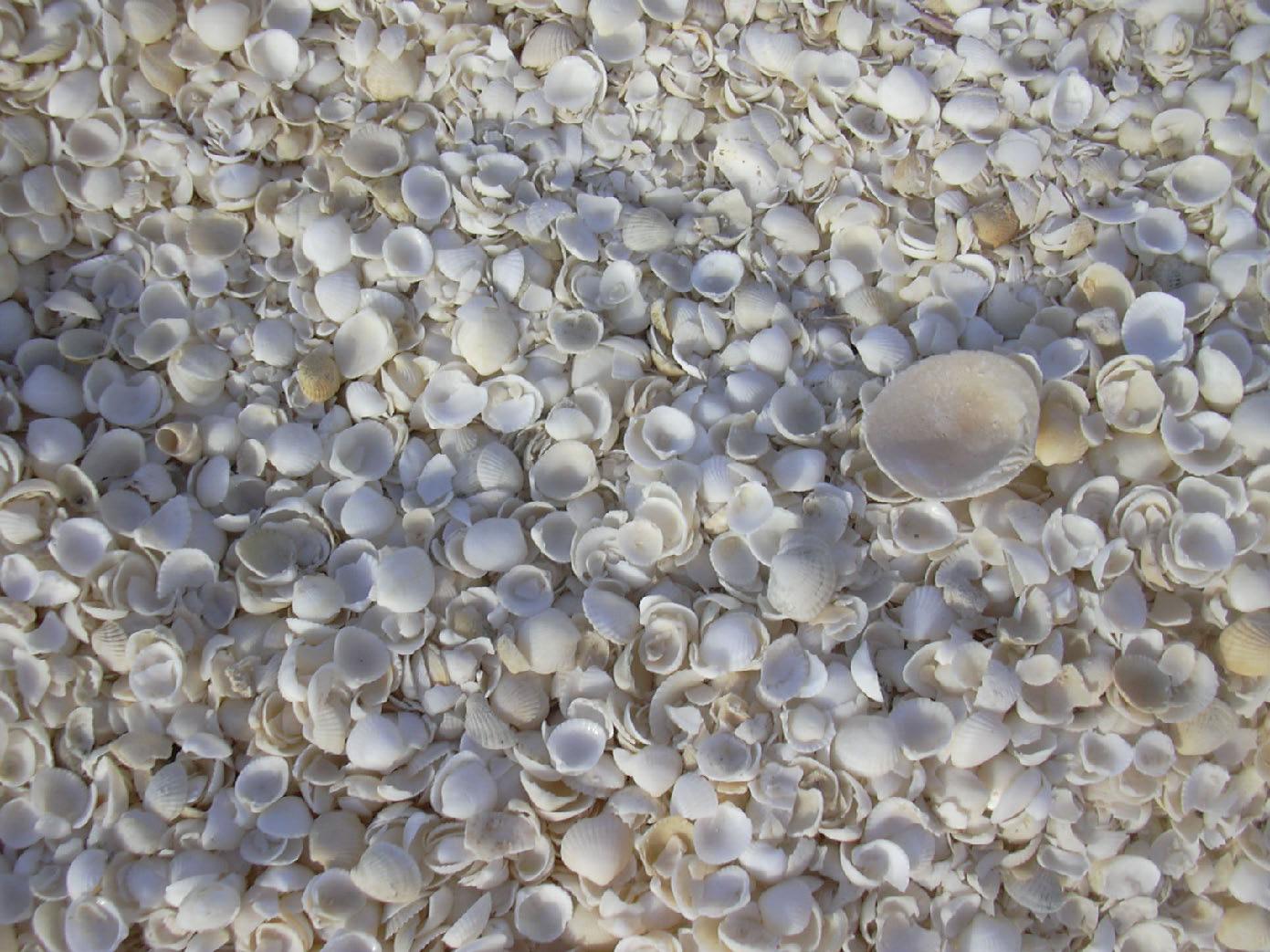 33 Самые необычные пляжи мира (фото)